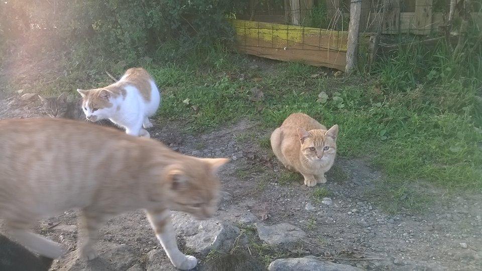 chats errants quai belle ile