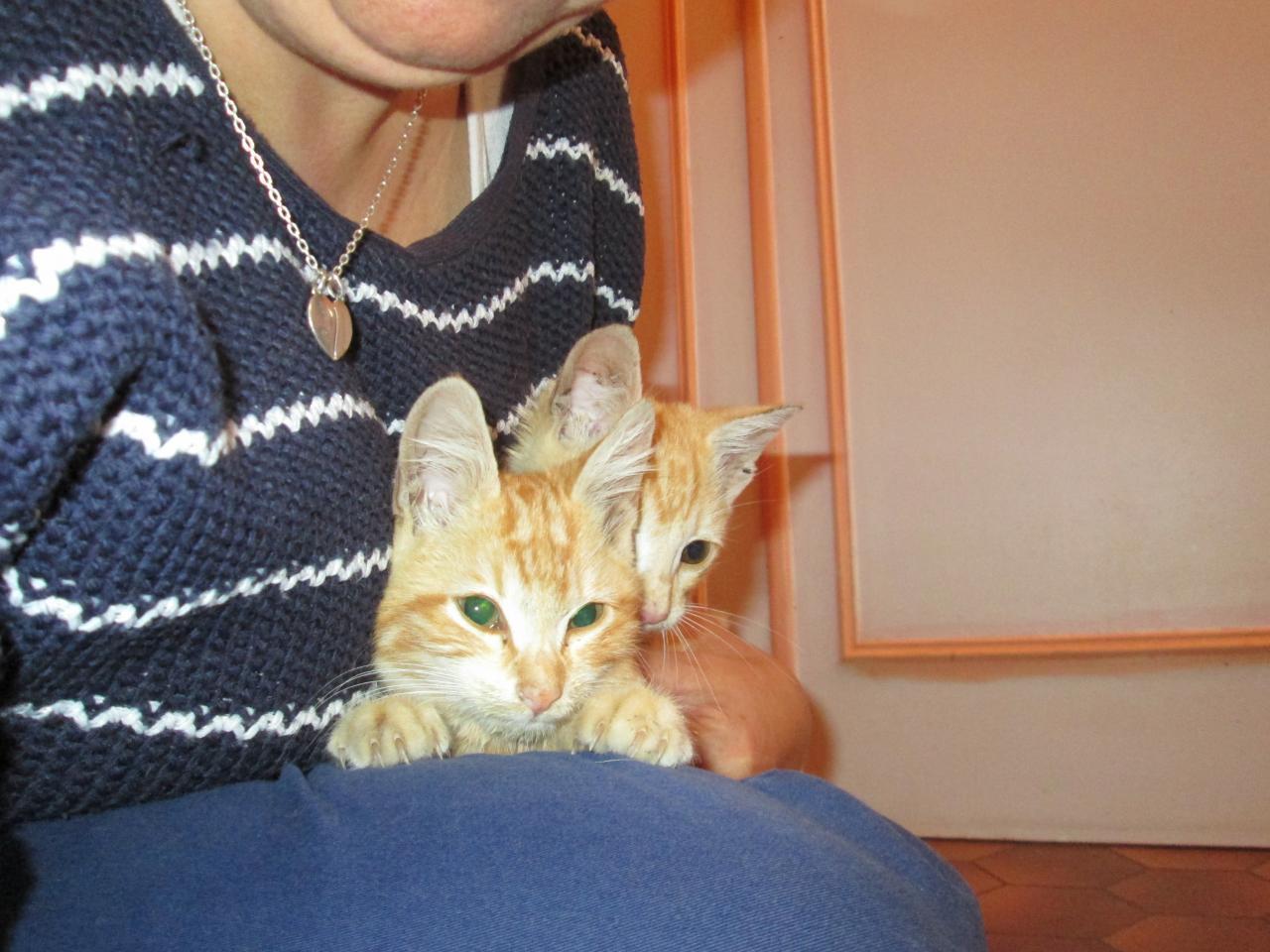 Maison de retraite de coulon, deux chatons.