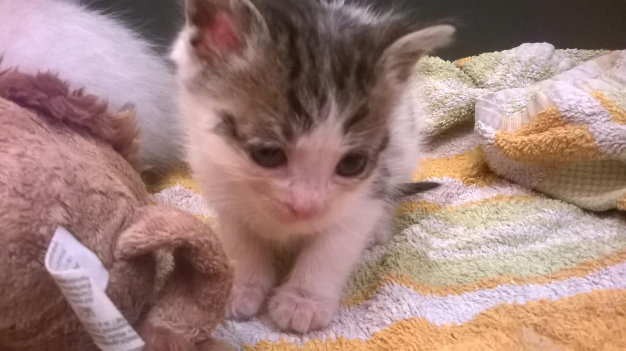 Melrick, né le 19 avril 2016. Décédé à l'age de 5 semaines