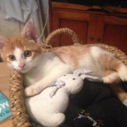 Otis mâle très affectueux et joueur, 3 mois