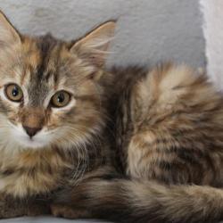 Orea, femelle, deux mois