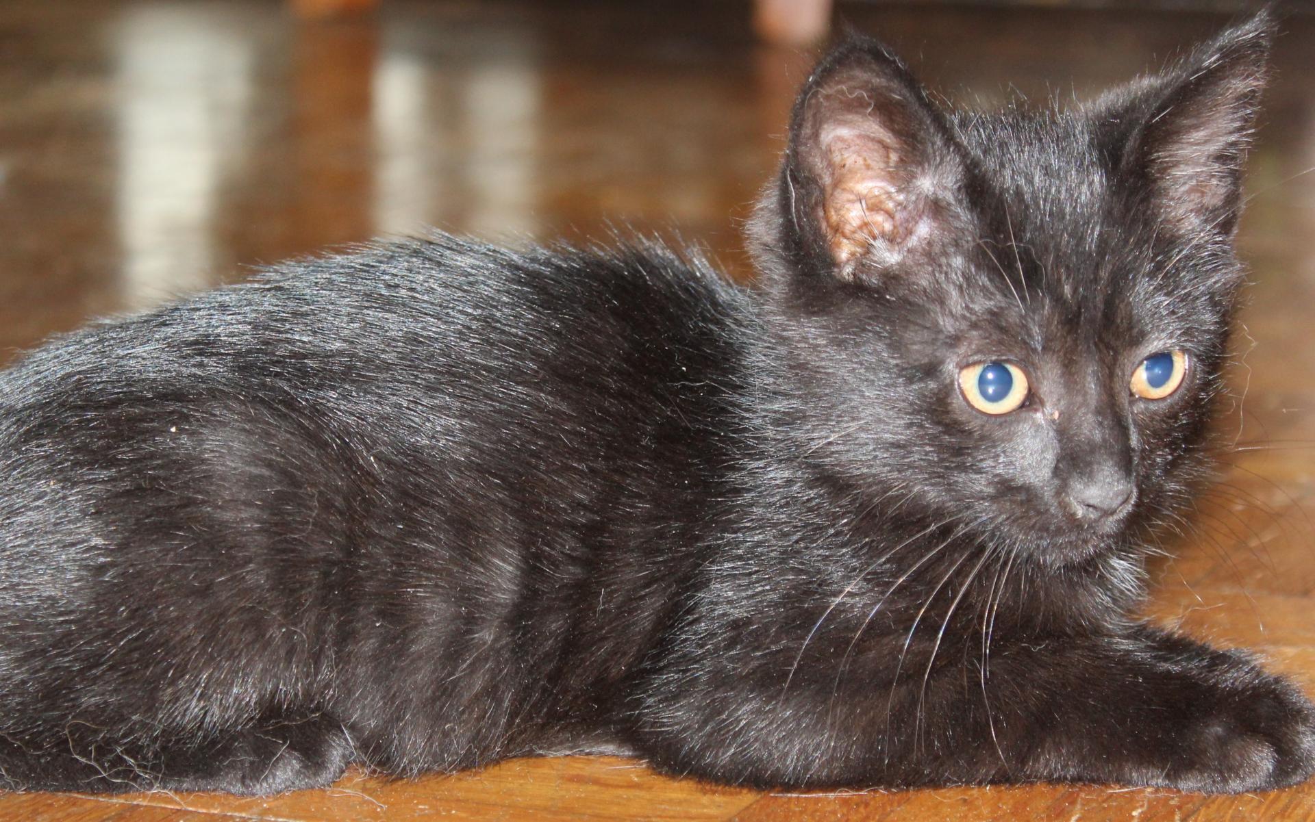 Polly, deux mois